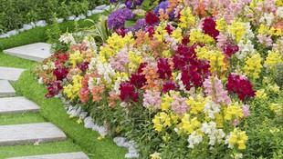 Flores y plantas para jardin en Ourense