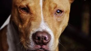 Reconocimientos médicos para tenencia de animales potencialmente peligrosos en Vecindario