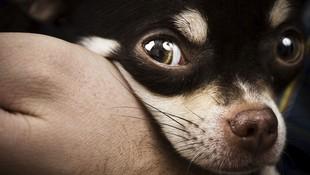 Tratamiento de problemas de piel de mascotas en Tenerife
