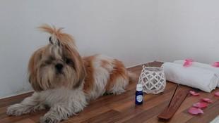 Tratamientos de belleza canina