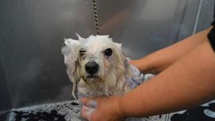 Clínica Veterinaria Reus, peluquería canina