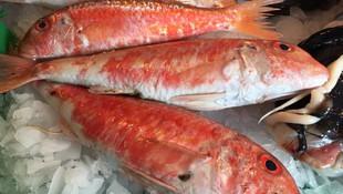 Pescado y marisco al por mayor en Mataró