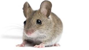 Control de plagas de roedores en Valencia