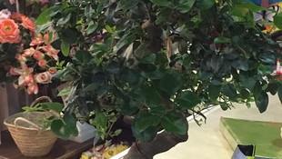 Decoración floral en Leganés