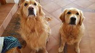 Residencia canina sin jaulas Tres Cantos