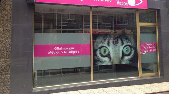 Oftalmólogo gatos oviedo
