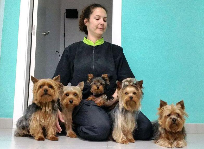 Urgencias veterinarias en Pilas