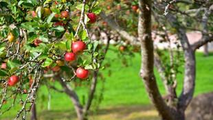 Venta de sidra natural al mayor y al detalle en Asturias