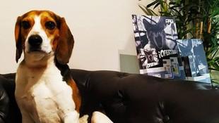 Cuidamos de tu mascota en Manresa