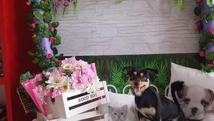Productos de belleza para mascotas Arona