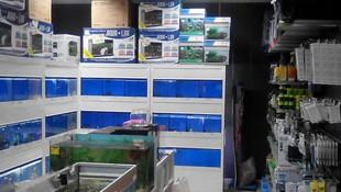 Venta de acuarios y peces en Santa Coloma de Gramanet