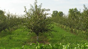 Productos para la huerta y jardín