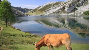 Carnes sostenibles en Aranda de Duero
