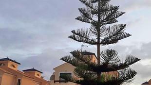Talar árbol y podar jardín