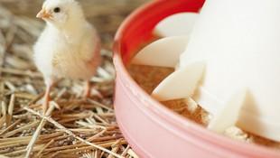 Venta de pollos en Aranda de Duero