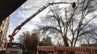 Trabajos de cesta para poda de árboles