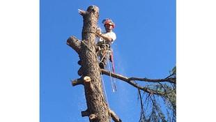 Poda y tala de árboles en Torrelodones