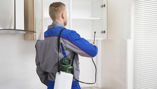 Eficacia y seguridad en el control de plagas en Guipúzcoa