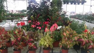 Venta de árboles y plantas Murcia