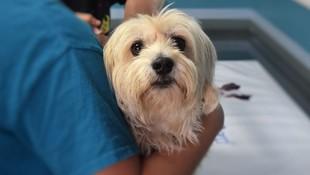 Urgencias veterinarias en El Ejido