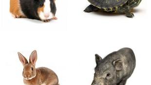 Veterinario animales exoticos