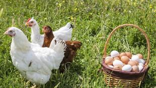 Venta de huevos de corral en Aranda de Duero