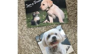 Azulejos personalizados de mascotas en Alzira, Valencia
