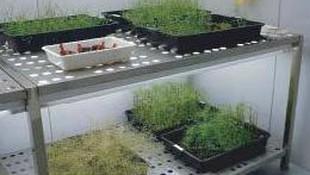 Mesa crecimiento plantas