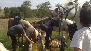 Equitación y equinoterapia en Aranguren, Navarra