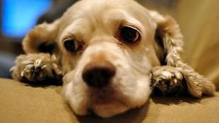 Medicina y cirugía para perros