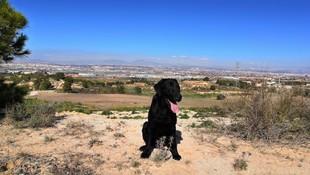 Murcia Dog