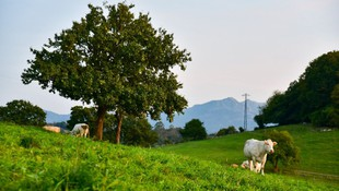 Sidra natural de alta calidad en Sariego