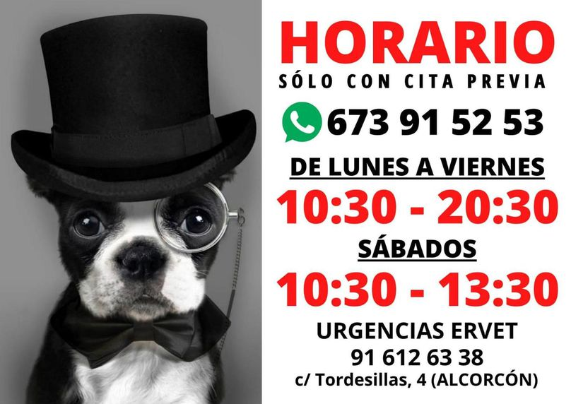 Clinica veterinaria Habana Boston. Horario