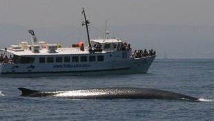 Avistamiento de Ballenas Dolphin Safari y rorcual común en Tarifa