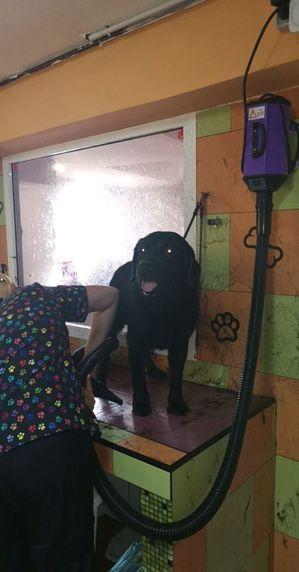 Escuela canina en Las Palmas de Gran Canaria
