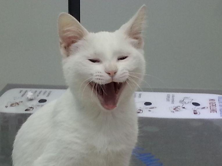 Veterinario para gatos en León
