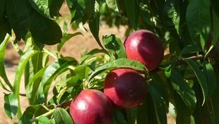 Empresa de producción y exportación de fruta fresca