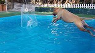 Adiestramiento con hidroterapia en Tres Cantos