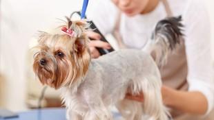 Servicio de peluquería canina en Las Palmas