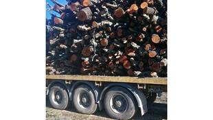 Transporte y distribución de leña en Soria