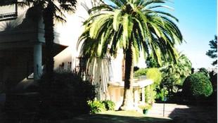 Poda de palmeras en Valencia