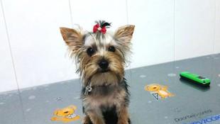 Servicio de peluquería canina en Pilas