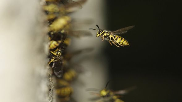 the-hive-1878855_1280 (1)