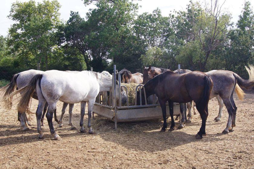 Apasionados de los caballos