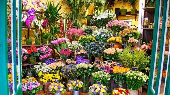 Todo tipo de flores y plantas en Gijón