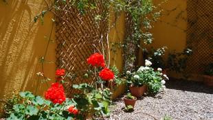 Nuestro patio