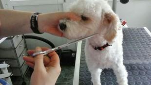 Cuidado de la imagen de tu perro