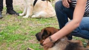 Adiestramiento de perros en Tenerife
