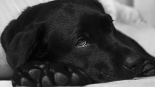 Diagnóstico y tratamiento de alergias de mascotas en Tenerife