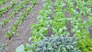 Productores de verduras y hortalizas en Alicante